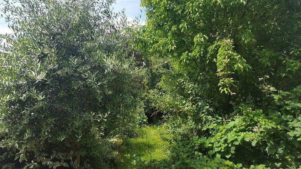 South West London. Reclaiming of overgrown garden