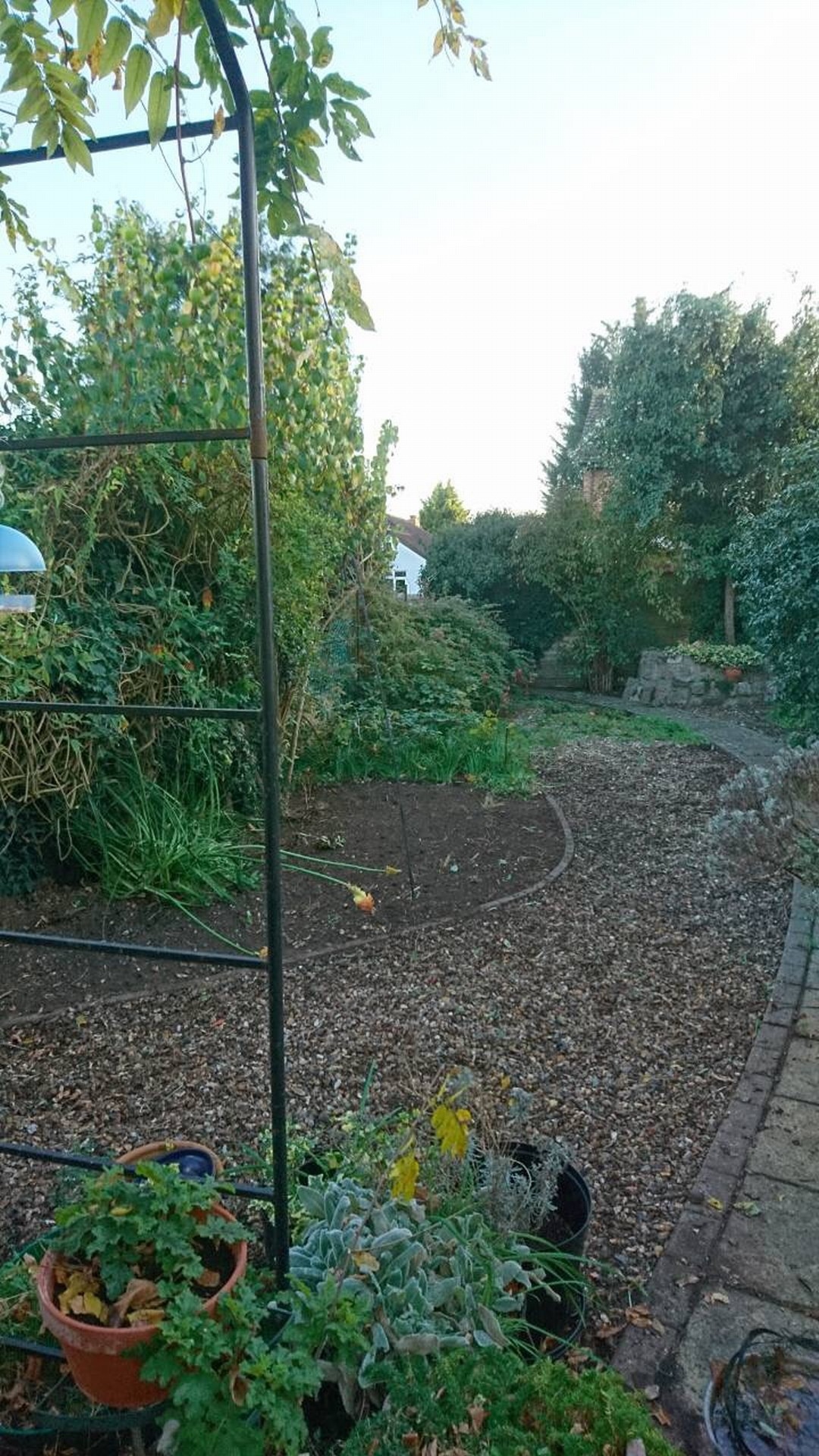 Surbiton. Reclaiming an overgrown garden.