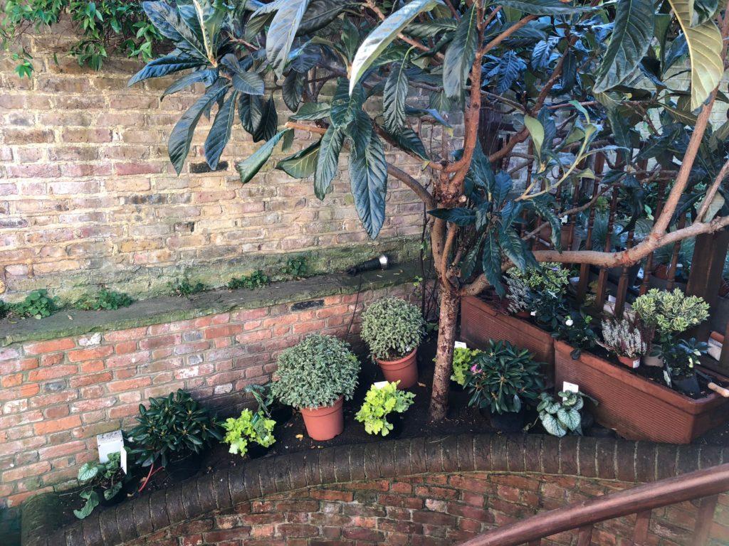 Fulham. Thematic seasonal planting